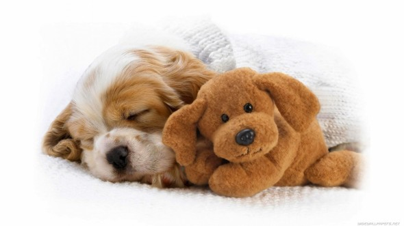 puppyandtoy-e1440804430962